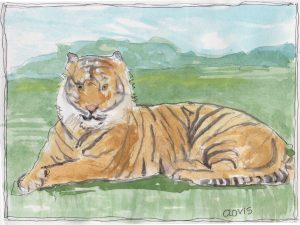 """Tiger 2,"" a Bring-a-Smile watercolor by Clovis Heimsath, artist"