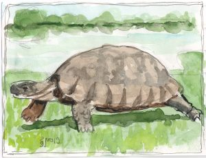 """Tortoise,"" a Bring-a-Smile watercolor by Clovis Heimsath, artist"