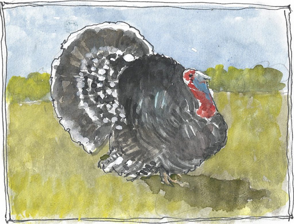"""Turkey 2,"" a Bring-a-Smile watercolor by Clovis Heimsath, artist"