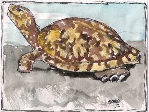 """Turtle,"" a Bring-a-Smile watercolor by Clovis Heimsath, artist"