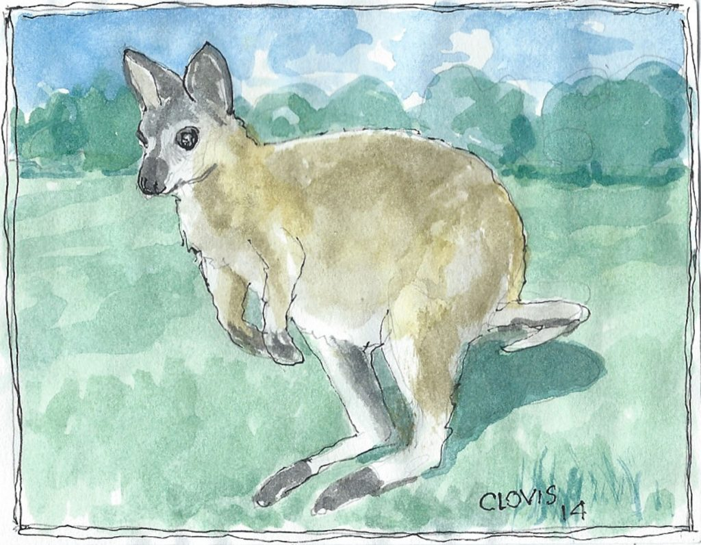 """Wallaby,"" a Bring-a-Smile watercolor by Clovis Heimsath, artist"