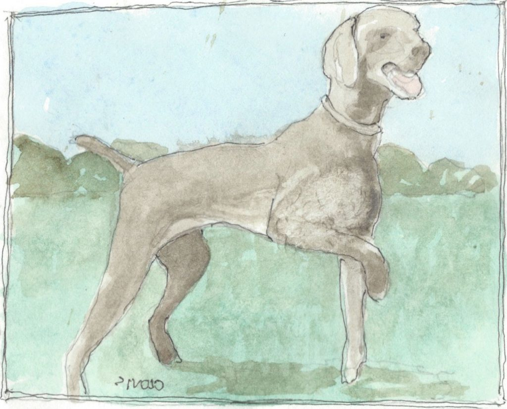 """Weimaraner,"" a Bring-a-Smile watercolor by Clovis Heimsath, artist"