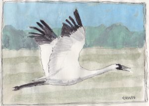 """Whooping Crane 2,"" a Bring-a-Smile watercolor by Clovis Heimsath, artist"