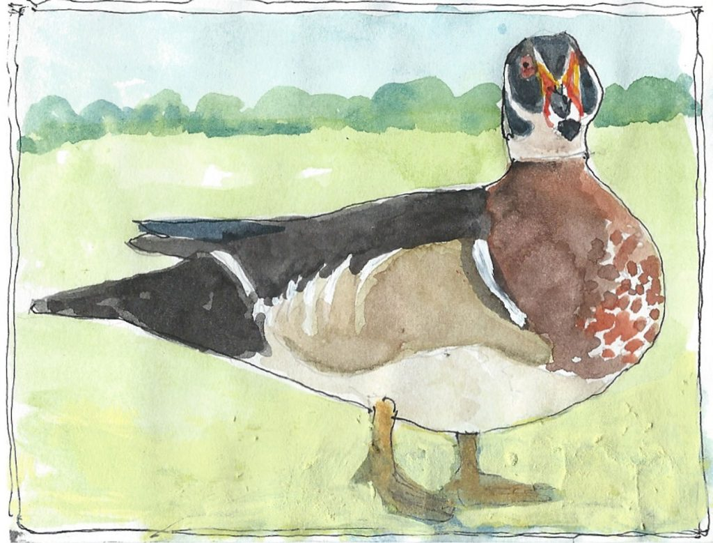 """Wood Duck,"" a Bring-a-Smile watercolor by Clovis Heimsath, artist"