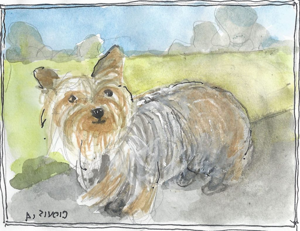 """Yorkie,"" a Bring-a-Smile watercolor by Clovis Heimsath, artist"