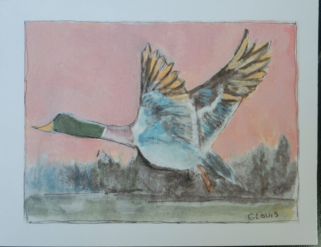 """Duck taking flight,"" a painting by Clovis Heimsath, artist, watercolor on paper, 4"" x 6"", Bring A Smile series, October 2020"
